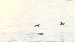 Duck,Fly,Landing Stock Footage