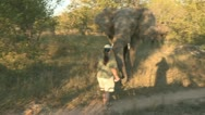 Stock Video Footage of ranger give a coke can to elephant