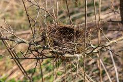 Bird's-nest Stock Photos