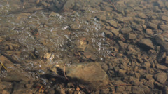 Clear water with chunks of melting ice - stock footage