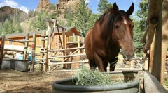 Horse Eating Stock Footage