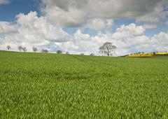 Idyllic rural landscape, cotswolds uk Stock Photos