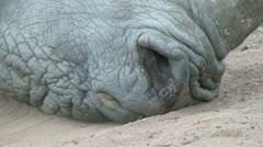White Rhino nostrils shot Stock Footage