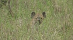 Hyena in long green grass Stock Footage