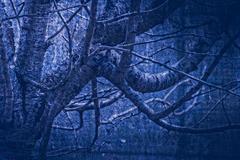 artwork in painting style gloomy wood in dark blue tones - stock photo