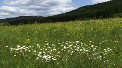 Meadow in Spring white and yellow flowers Stock Footage