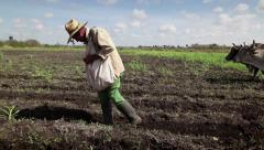 Group of Cuban men working in farm fields with plow and seeds to prepare crop Stock Footage