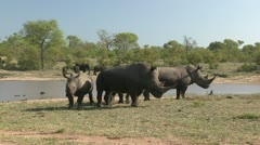 Rhino's at waterhole Stock Footage