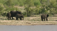 Elephants near water Stock Footage