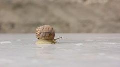 Snail peeping out and crawling Stock Footage