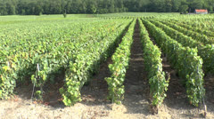 Vineyards above Moussy,Champagne-Ardenne, France. Stock Footage