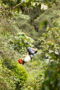 Stock Photo of Zip Line Adventure In Ecuadorian Rainforest Banos De Agua Santa