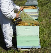 Working apiarist and  Bees - stock photo