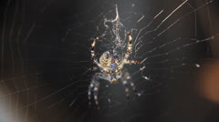 Spider in the centre of web Stock Footage