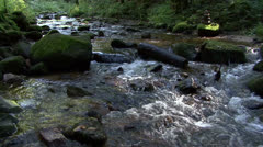 Beautiful forest creek 02 - stock footage