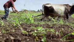 Cuban farmer working in the field, man plowing earth with plow in farm Stock Footage