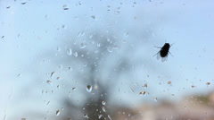 Fly on window Stock Footage