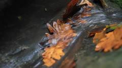 Yellow oak leaves in streamlet Stock Footage