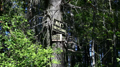 No trespassing in forest signs Stock Footage