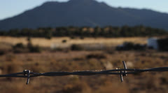 Spider Crawling on Barbed Wire Stock Footage