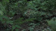 Rabbit 1 Stock Footage