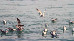 Birds feeding. Slow motion Stock Footage