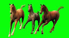 Galloping Horses Stock Footage