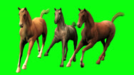 Stock Video Footage of Galloping Horses