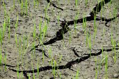Cracked soil in rice farm Stock Photos