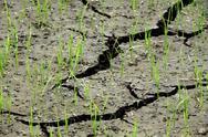 Cracked soil in rice farm Stock Photos