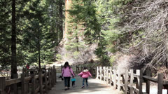 Family hike trail King Canyon National Park Redwood Sequoia HD 6394 Stock Footage
