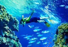 Child diver with group coral fish. Stock Photos