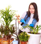 woman  looking after houseplant at home. - stock photo