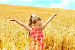Child in summer wheat field. Stock Photos