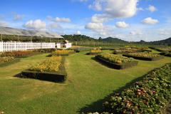 Cultivate flower garden Stock Photos