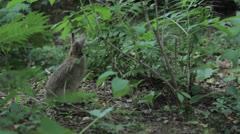rabbit 6 - stock footage