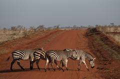Animals in Tsavo East/West and Amboseli National Park Kenya Stock Photos