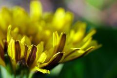 A Flower's Living Beauty - stock photo