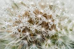 Heavenly Drops of Grace Stock Photos