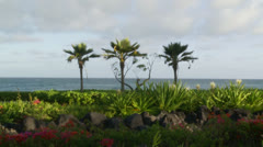 Palm Trees in Hawaii Stock Footage