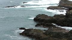 Cormorant birds on coastal shore rough waves HD 5953 Stock Footage