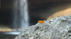 Common leopard butterfly resting on stone with waterfall background Stock Footage