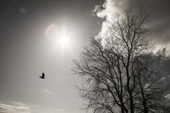 Tree, bird, sun, and cloud Stock Photos