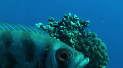 Fish eye - stock footage