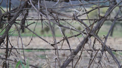Barbed Wire Fence Winery Stock Footage