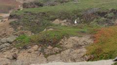 Glass Beach Ft Bragg coastal ocean beach pan HD 6011 Stock Footage