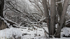 Trees in forrest after snowfall Stock Footage