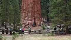 Tourists Sequoia National Park General Sherman Tree HD 6450 Stock Footage