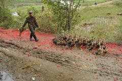 Chinese woman walking with her ducks on muddy trial - stock photo