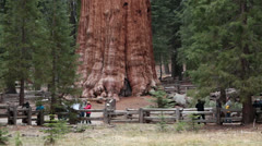 Tourists Sequoia National Park General Sherman Tree fast timelapse HD 6450 Stock Footage
